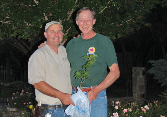 Robert Hafeskebring and Keith Johansson with Shantung maple.
